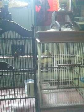 Burung rawatan gacor