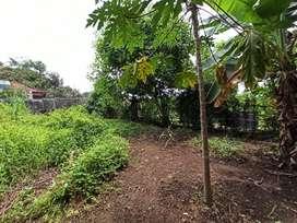 Dijual Tanah Sangat Luas Pinggir Jalan Timor Sinduadi, Mlati, Sleman