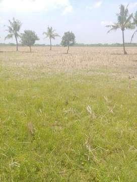 Tanah Kosong siap Survey di Sukawangi, Bekasi