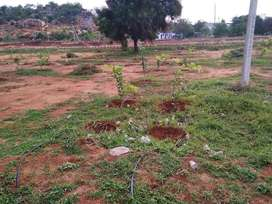 Open plots for sale at Aler, Near Tourism Area, Get A Gold Coin Free