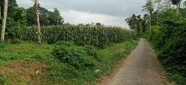 Tanah sangat luas dan murah di Wajak Malang