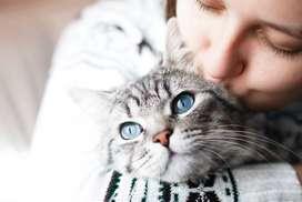 Lowongan Kerja Perawat Kucing Daerah Citra Gran Cibubur