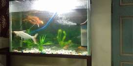 Big shize Fish tank with stand and fish