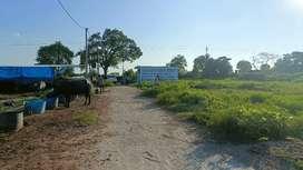 Selling plots near IIM road