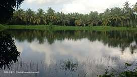 44 Acre Full setup Cocanut  Farm for Sale 70000 per cent  at Thrissur
