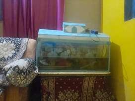 A fish aquarium