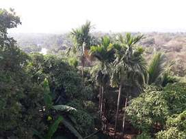 24hr natural airy highted plot 1500sq.mtr.