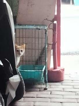 Kucing oren jantan kitten mix