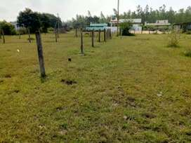12cents land in mutchalaamma nagar,backside of gamoil trees