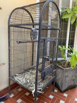Grey Parrot Cage for Sale: