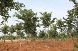 low cost organic villa plot for sale in srisailam highway