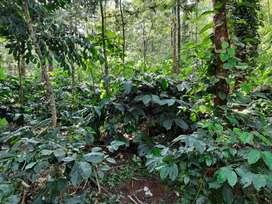 6 acre coffee estate for sale near magge  hassan