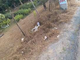 Plot on Danapur Bihta main road