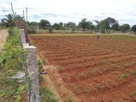 .80 cents of Agriculture/ farm land  sale near Shoolagiri