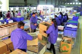 Helper in Factory for cutting to packing