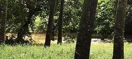 Ernakulam district  - Kombanad, 7.5 acre land for Sale