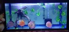 3 Feet  Aquarium for sale