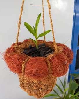 Pot serabut kelapa