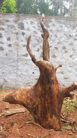 Jackfruit root for home decoration