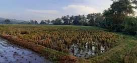 Tanah sawah murah mer