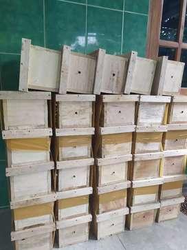 Kotak, lebah klanceng, kelulut, trigona, madu, koloni
