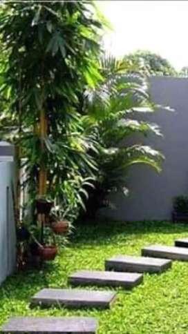 jual rumput gajah mini.rumput .pembuatan taman kolam mini malis