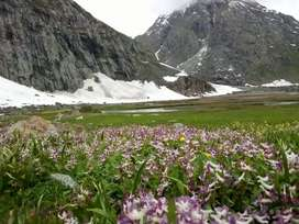Swat tourism and travel agency
