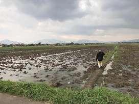 Jual Tanah Sawah Produktif Pinggir Jalan