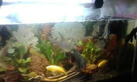 Jual aquarium full set