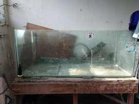 Aquarium bekas Lohan dan Arwana