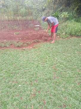 Tukang rumput bikin taman taman indah