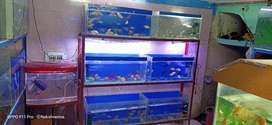 Aquarium service and cleaning with best price