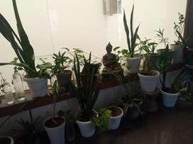 Buddha and plants indoor