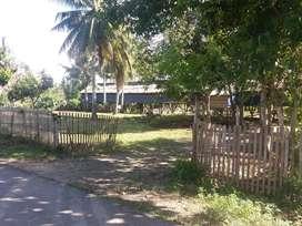 Tanah Peternakan