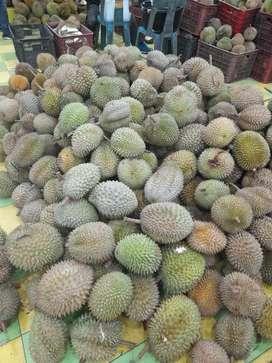 Buah durian sibolga