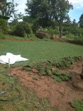 Taman rumput swiss