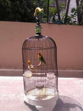 Burung Lovebird 1 pasang