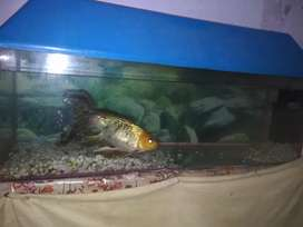Good looking aquarium 3 feet new condition and best price