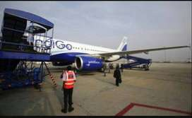 limited company permanent job.direct hiring. Indigo Airline Urgent hir