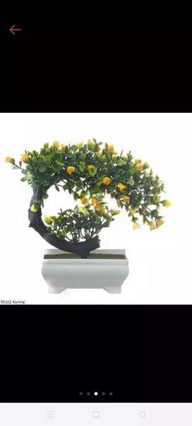 Bonsai sabit ready kuning, orange dan ungu