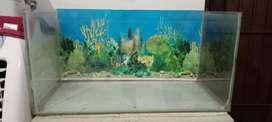 Fish tank 2 ft
