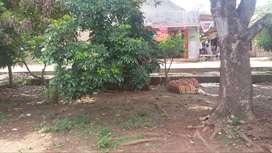Tanah di Purwasari - Karawang