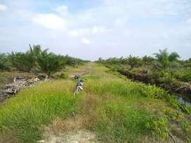 Dijual kebun sawit 20 Ha+2 Ha tanah kosong (1 hamparan) di Siantan