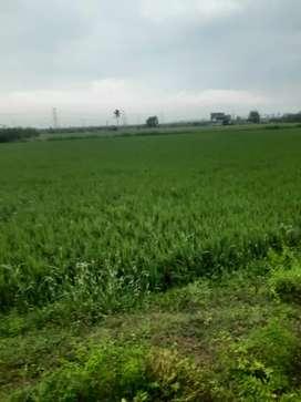 Farm land sale
