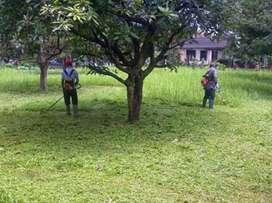 perawatan taman dan potong rumput