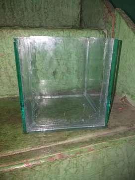 Aquarium ikan cupang