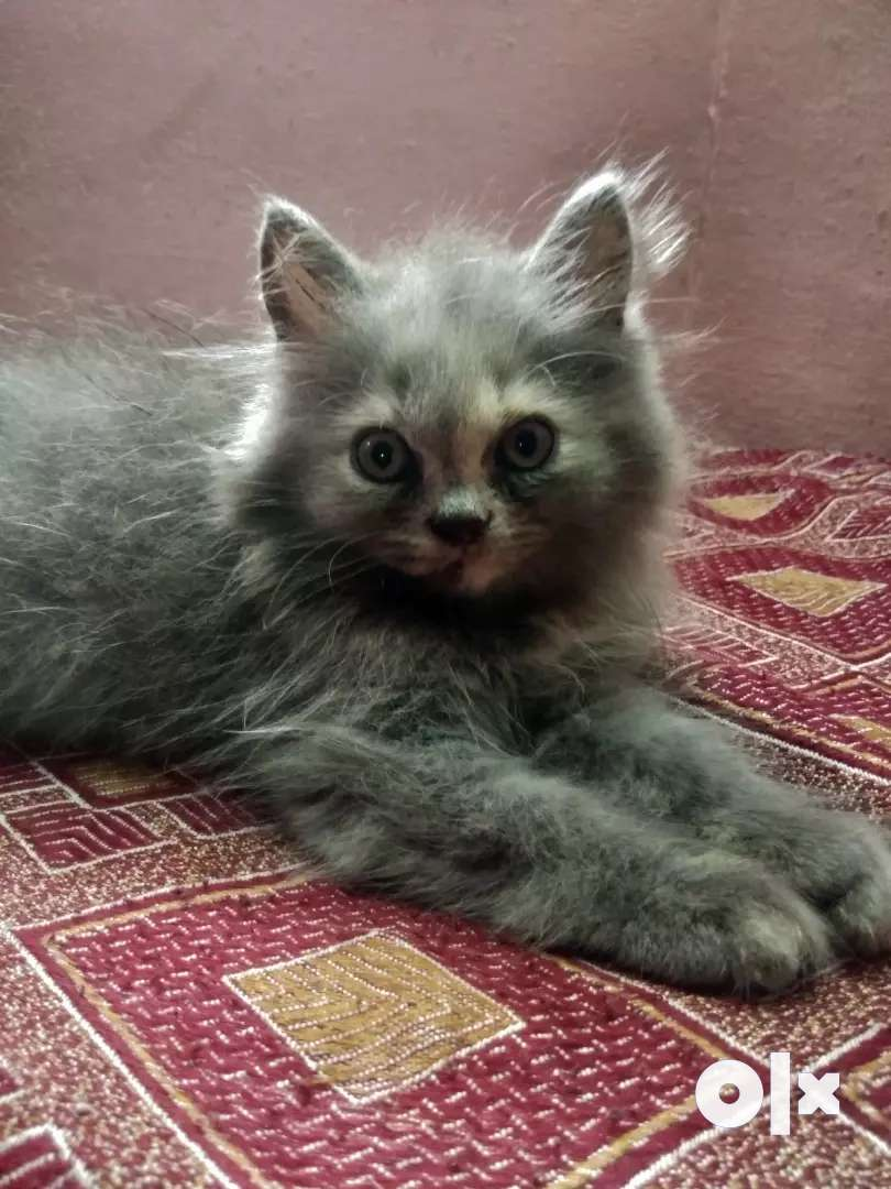 kitten for sale..  one month and 18days.. 0