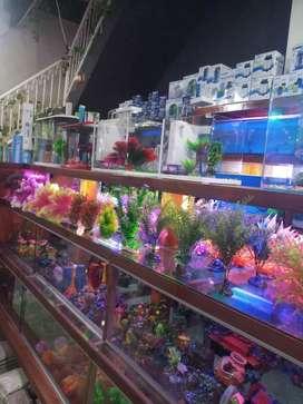 Lowongan  toko aquarium