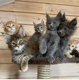 Kittens mix colours kittens