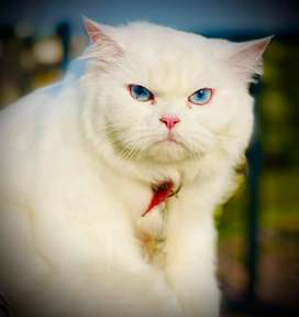 My cute cat sall
